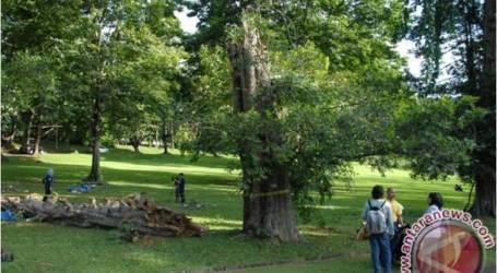 الرئيس جوكوي يريد أن تكون حديقة بوجور النباتية أكثر جاذبية