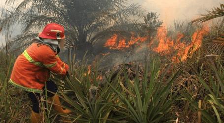 أبلغت وكالة الأرصاد الجوية وعلم المناخ والجيوفيزياء عن 18 نقطة ساخنة في منطقة بنجكاليس