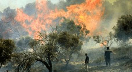 مستوطنون يحرقون محاصيل زراعية فلسطينية جنوبي الضفة