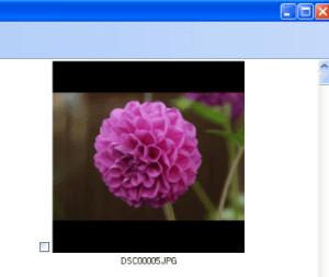 برنامجJMG Photo Printer
