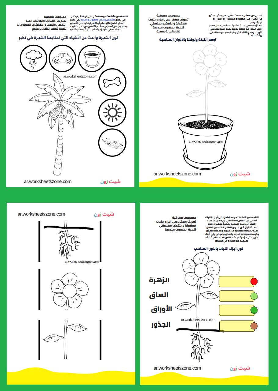 اجزاء النبات بالصور للاطفال تلوين وأنشطة تفاعلية أوراق عمل