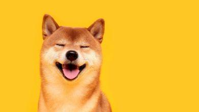"""عملة """"Dogecoin"""" تسجل قمة جديدة والقيمة السوقية للعملة تتجاوز قيمة تويتر!"""