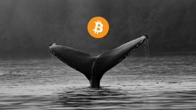استخدام الحيتان كمية أقل من البيتكوين لتحريك الأسواق في 2021 مقارنة بـ 2017...إليك السبب!