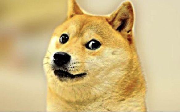 بلغت العرض المالي عل صورة Doge NFT قيمة 300 مليون دولار