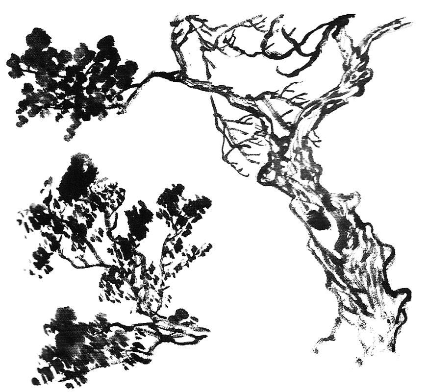 اللوحة الصينية : التنوب