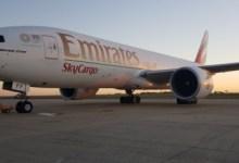 Photo of الإمارات للشحن الجوي شغّلت رحلات تشارتر لتصدير الكرز التشيلي