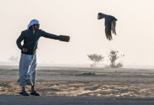 Photo of Year 2019 ends and 2020 begins on a high note with the opening of Fazza Championship for Falconry-Telwah