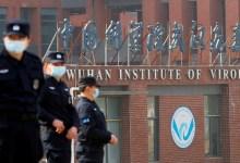 """صورة """"التلغراف"""" البريطانية: علماء معهد ووهان الصيني خططوا لنشر كورونا في الخفافيش عام 2018"""