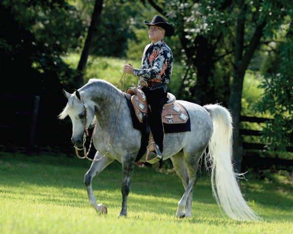 East Manor Arabians