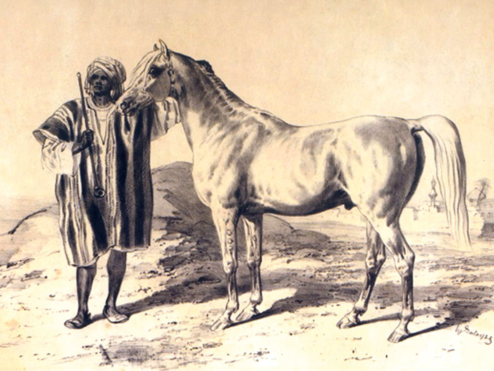 The Arabian Horse: Nature's Creation and the Art of Breeding