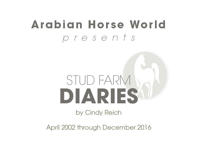 Stud Farm Diaries Volumes 1-3