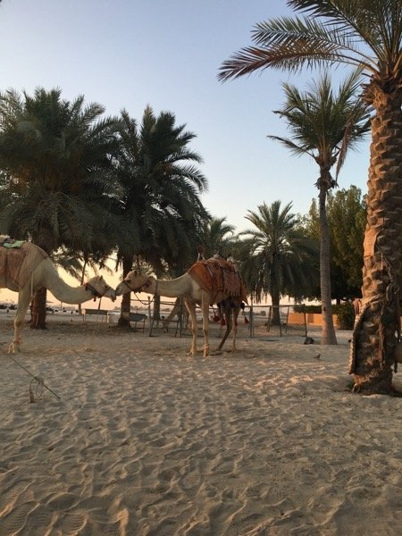 Emirates Palace Discovery Loyalty Arabian Notes 2016 24