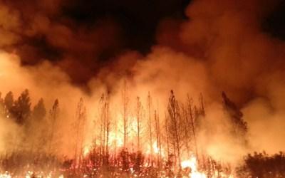 ارتفاع عدد ضحايا أسوأ حرائق غابات في كاليفورنيا إلى 48 قتيلاً