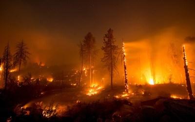 88 قتيلا و196 مفقوداً في أسوأ حريق غابات بكاليفورنيا