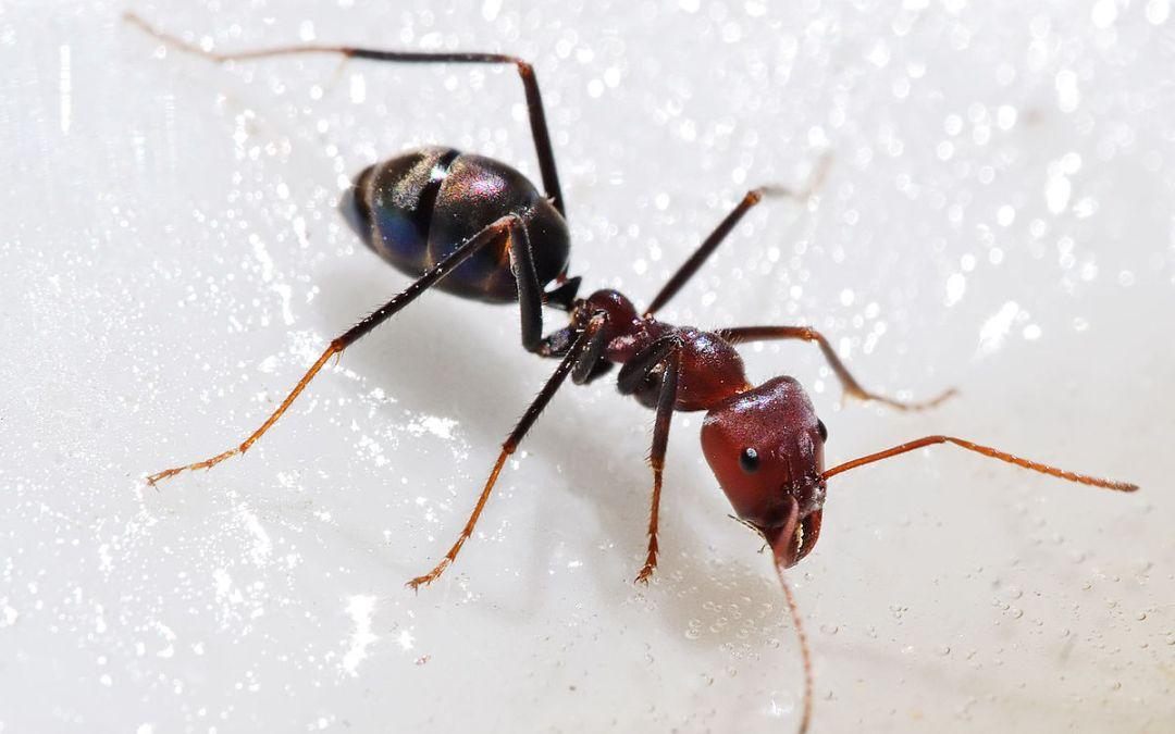 اكتشاف وكر نمل في قرية كبرات قضاء صيدا يضم ملايين النمل أطول من 5 سم وهي مسمة