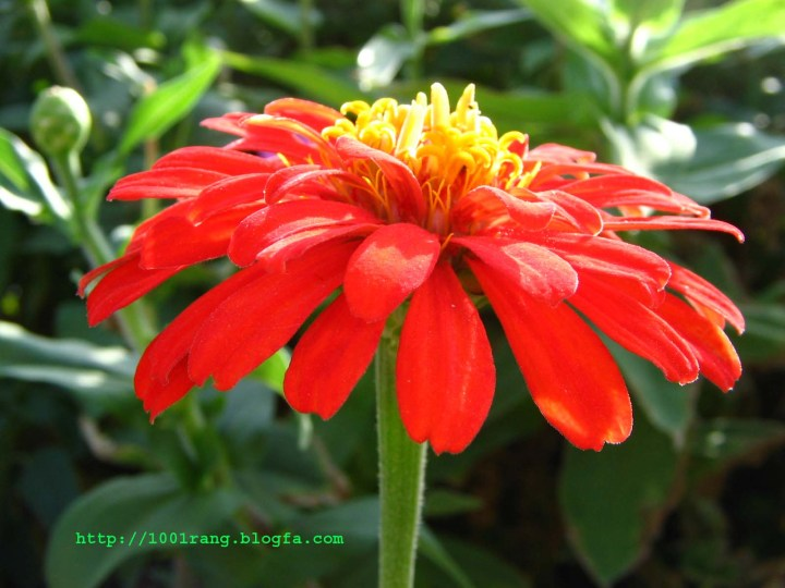 عکس های زیبا از گلها و گیاهان