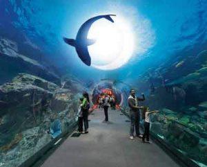 Dubai Aquarium & Underwater Zoo - c by thedubaiaquarium.com