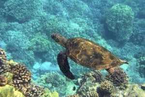 Ras Mohammed Nationalpark - Einzigartige Unterwasserwelten