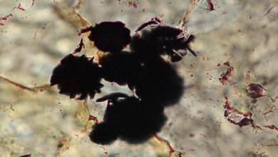 Photo of صخور تثبت أن الحياة على الأرض وجدت منذ 4 مليارات عام