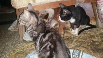 Photo of بالصور.. لغز مسنة مصرية عثر بشقتها على مقبرة قطط مذبوحة