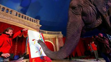 "Photo of للبيع.. لوحات بـ""خرطوم"" أنثى فيل"