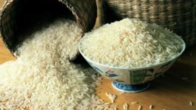 Photo of اختراق.. زراعة الأرز بالمياه المالحة