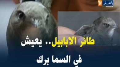 """Photo of جدل بعد مزاعم عن العثور على """"طائر الأبابيل"""" في الجزائر"""