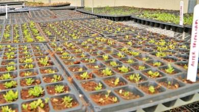 Photo of نجاح زراعة خضروات ملحية غنية غذائياً ومفيدة طبياً في الإمارات