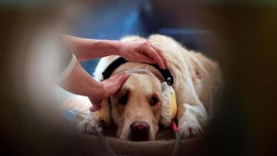 Photo of كلاب حساسة للكشف المبكر عن سرطان الرئة