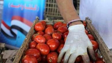 Photo of نقيب الفلاحين يكشف عن كارثة خطيرة في بذور طماطم (023) تنتظر مصر