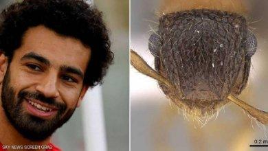 "Photo of أستاذ في جامعة الملك سعود يكرّم ""صلاح"" بطريقة غريبة"