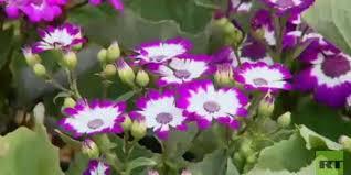 Photo of معرض الزهور السنوي في مصر