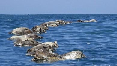 Photo of أسباب نفوق السلاحف البحرية بالمكسيك مجهولة