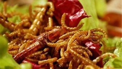 Photo of أكل الحشرات يحميك من السرطان!!