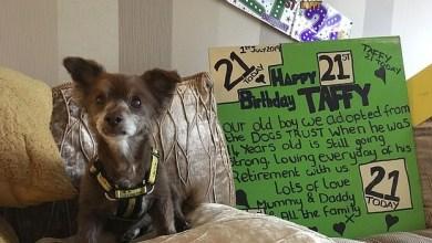 Photo of احتفال بعيد ميلاد أكبر كلب معمر في بريطانيا
