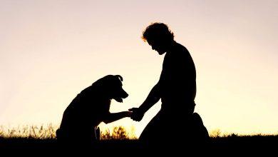 Photo of فطر يقتل كلبًا ويصيب صاحبه بولاية مينيسوتا
