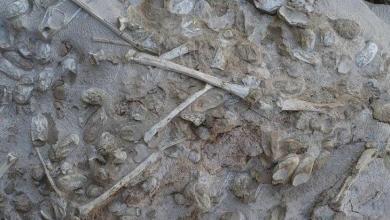 Photo of اكتشاف حفريات أجنة عمرها 610 ملايين سنة في الصين