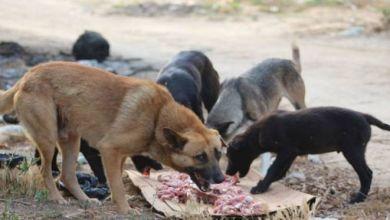 Photo of جريمة بشعة.. ألقت مولودها في أرض قاحلة فأكلته الكلاب حيًّا