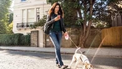 Photo of إدمان الهواتف الذكية يضر بكلبك