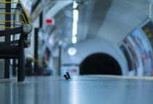 "Photo of ""شجار فئران المحطة"" تفوز بجائزة أفضل صورة في لندن"