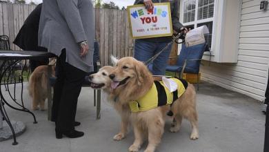 Photo of بريطانيا تدرب الكلاب للكشف عن المصابين بفيروس كورونا