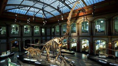 Photo of 8 متاحف يمكنك زيارتها دون خوف من كورونا