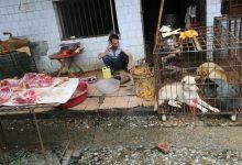 Photo of أول مدينة صينية تحظر أكل القطط والكلاب بعد كورونا