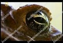 صورة غزو الضفادع القاتلة