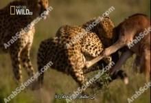 صورة هجرات عظمى : ح3 HD