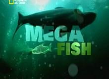 الأسماك الضخمة
