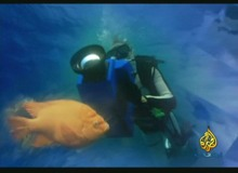 كائنات أعماق المحيط
