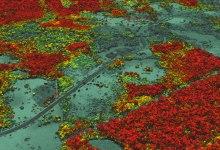 صورة مقال – حماية الغابات : مسح هائل لأشجار هائلة