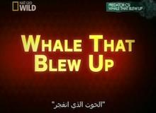 التحقيق في الضواري : الحوت الذي انفجر