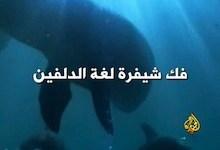 فك شيفرة لغة الدلفين